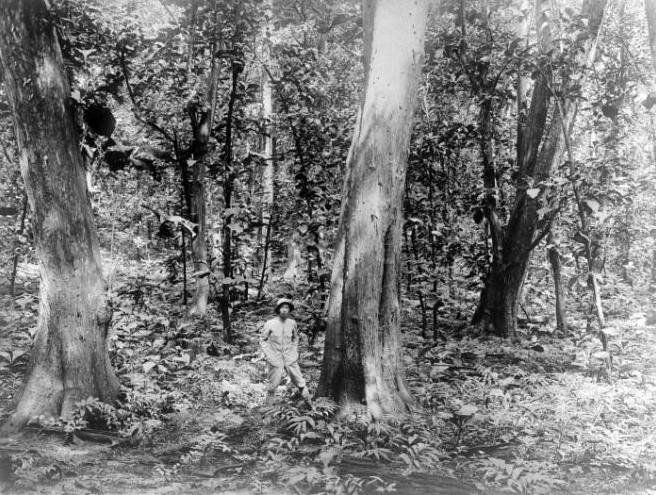 Asal usul nama Jatipadang Hutan pohon jati masa belanda